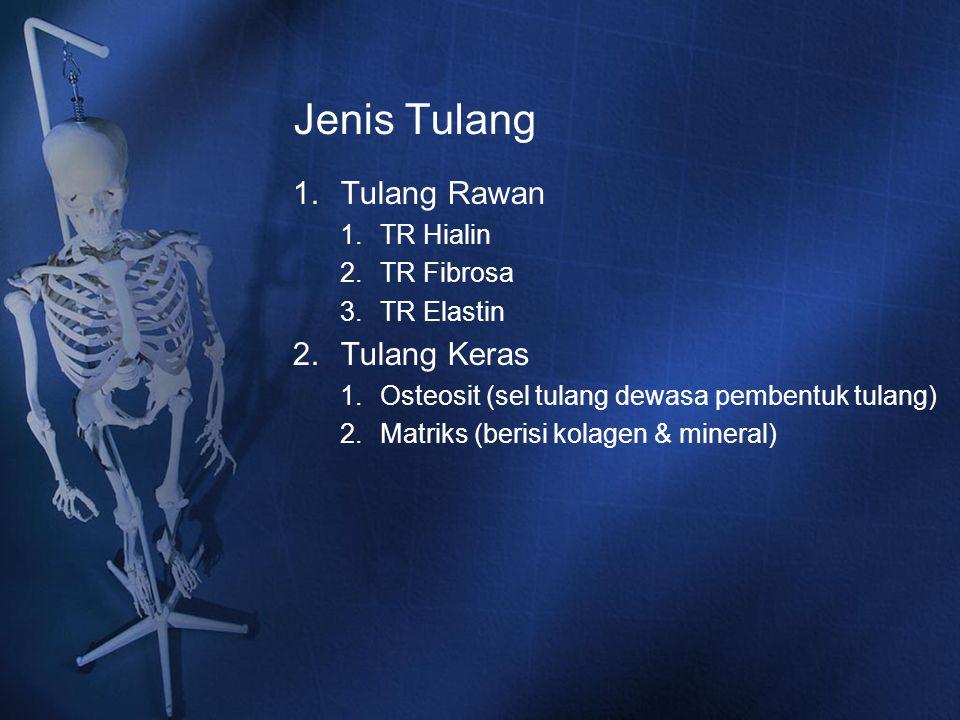 Jenis Tulang Tulang Rawan Tulang Keras TR Hialin TR Fibrosa TR Elastin
