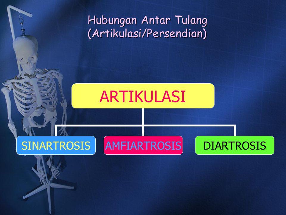 Hubungan Antar Tulang (Artikulasi/Persendian)