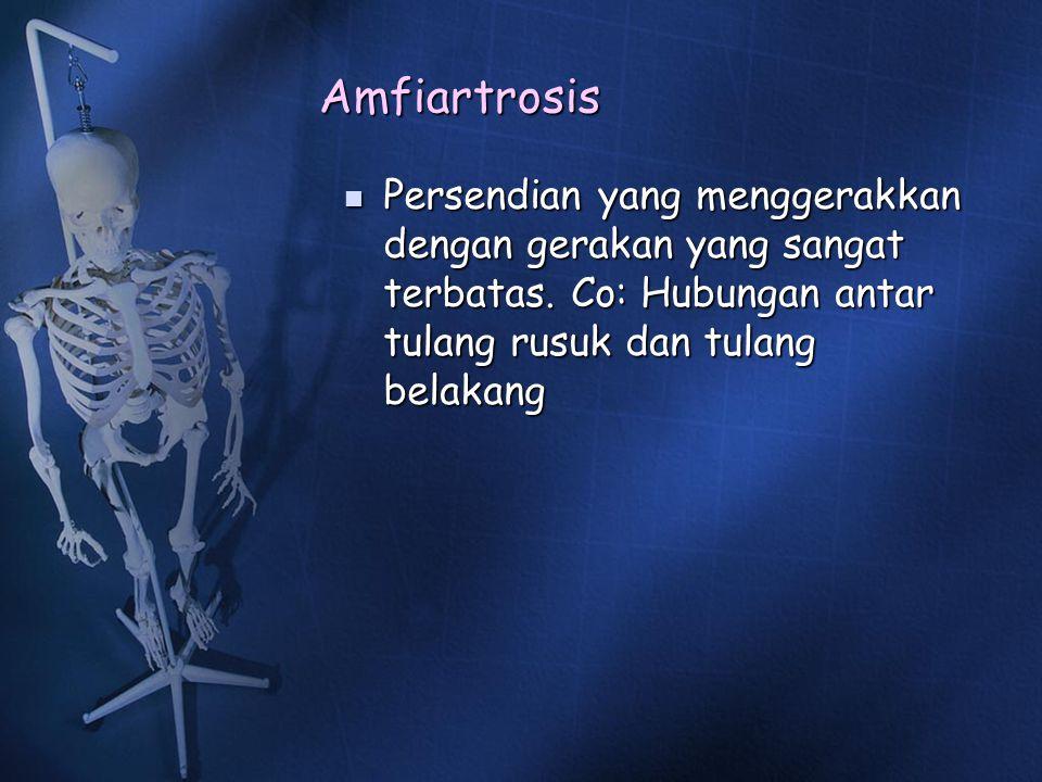 Amfiartrosis Persendian yang menggerakkan dengan gerakan yang sangat terbatas.
