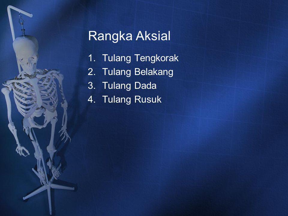 Rangka Aksial Tulang Tengkorak Tulang Belakang Tulang Dada