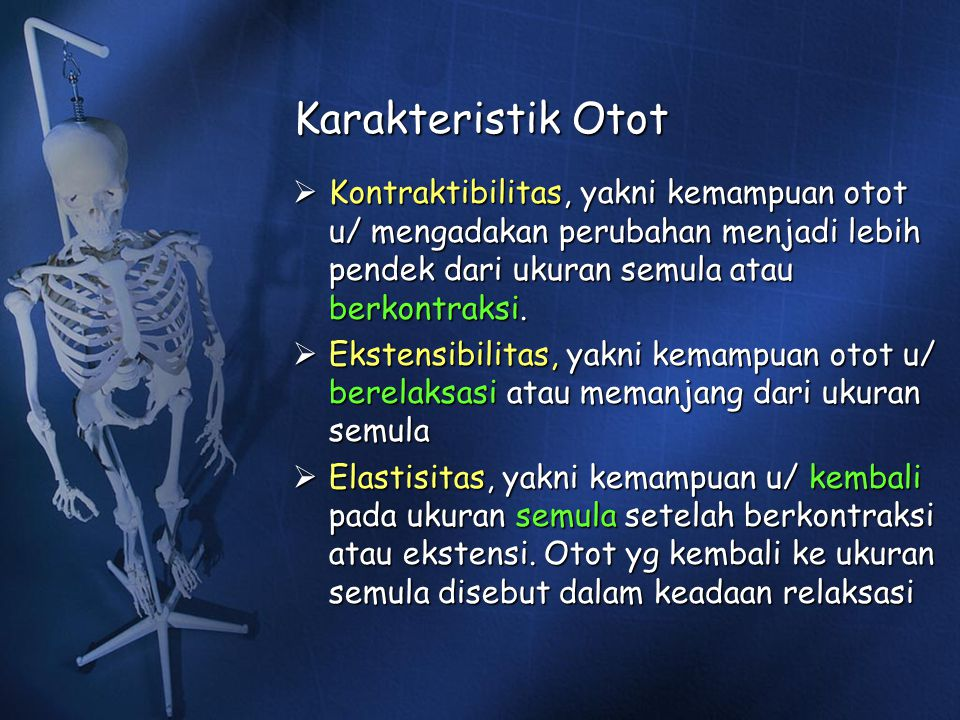 Karakteristik Otot Kontraktibilitas, yakni kemampuan otot u/ mengadakan perubahan menjadi lebih pendek dari ukuran semula atau berkontraksi.