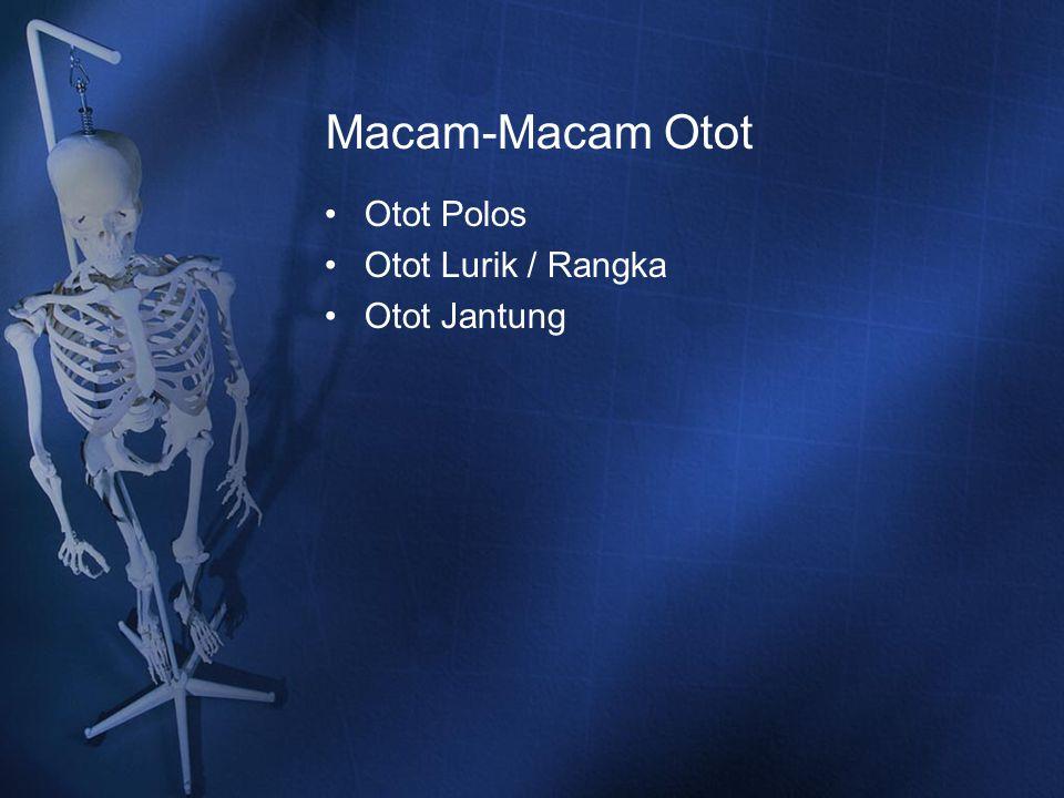 Macam-Macam Otot Otot Polos Otot Lurik / Rangka Otot Jantung