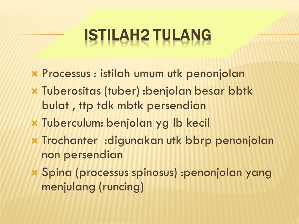 Istilah2 Tulang Processus : istilah umum utk penonjolan