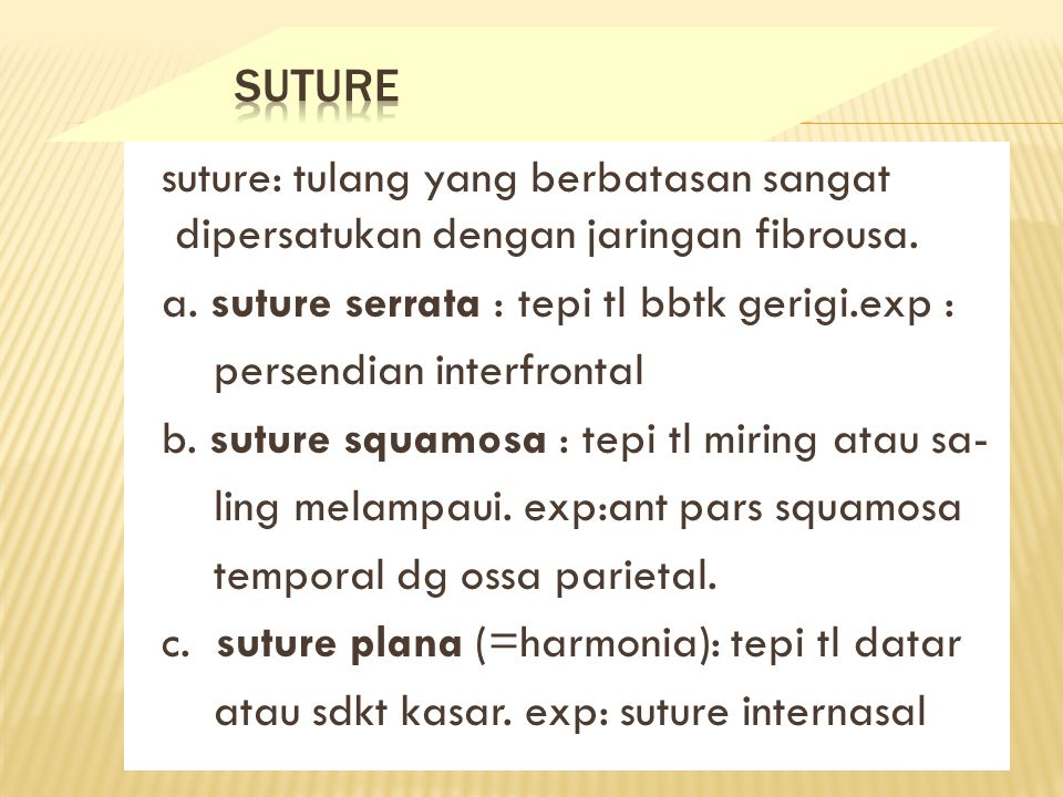 SUTURE suture: tulang yang berbatasan sangat dipersatukan dengan jaringan fibrousa. a. suture serrata : tepi tl bbtk gerigi.exp :