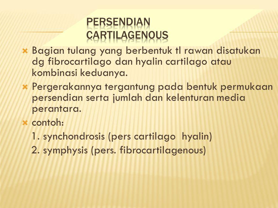 PERSENDIAN CARTILAGENOUS