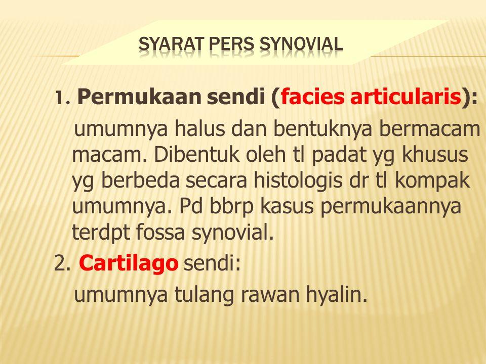 1. Permukaan sendi (facies articularis):
