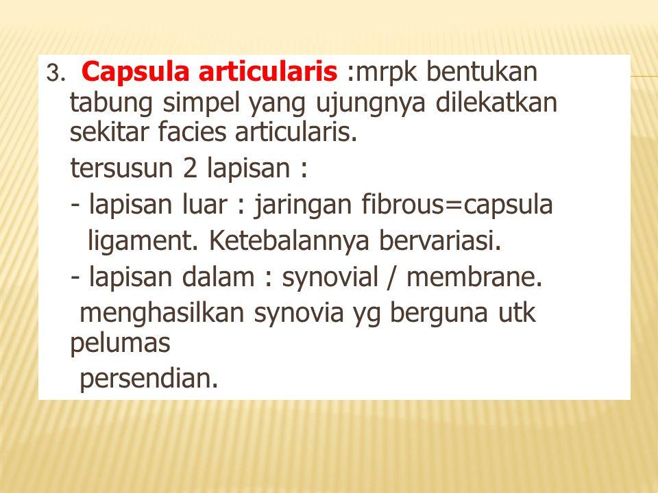 3. Capsula articularis :mrpk bentukan tabung simpel yang ujungnya dilekatkan sekitar facies articularis.