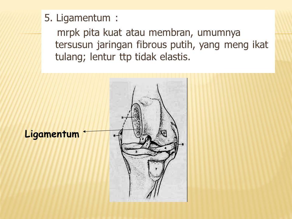 5. Ligamentum : mrpk pita kuat atau membran, umumnya tersusun jaringan fibrous putih, yang meng ikat tulang; lentur ttp tidak elastis.