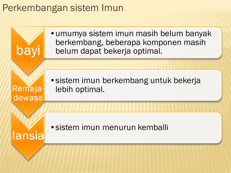 bayi Perkembangan sistem Imun Remaja-dewasa