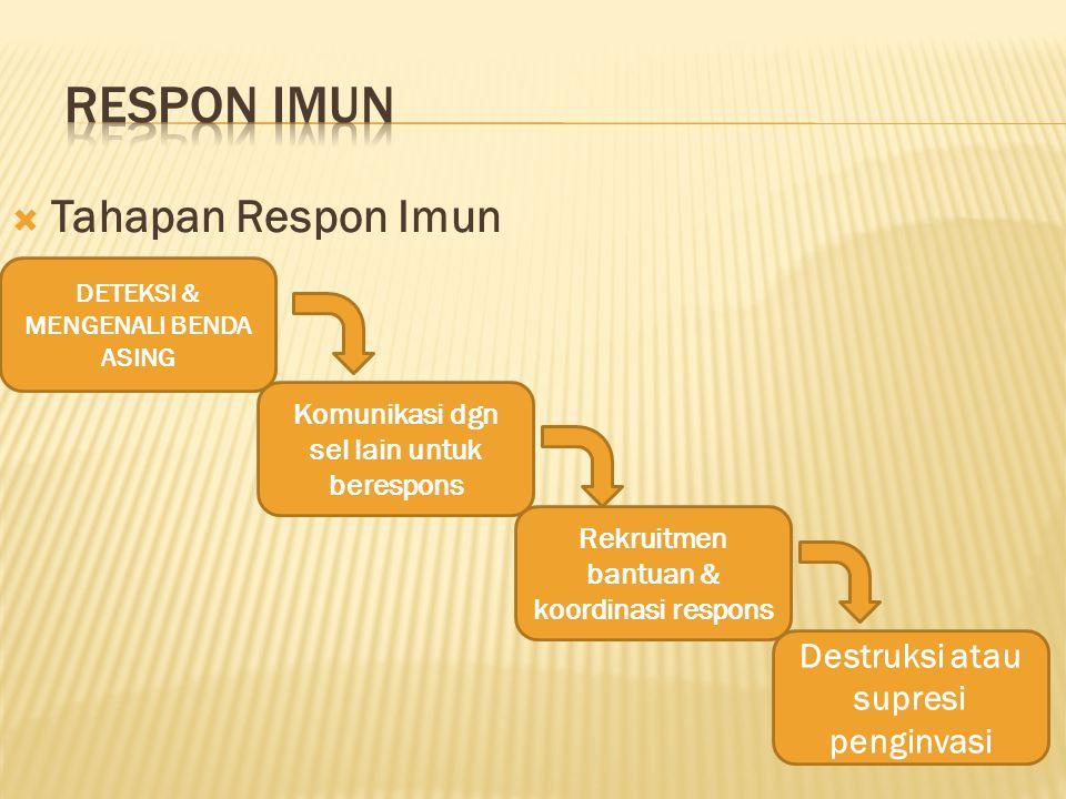 RESPON IMUN Tahapan Respon Imun Destruksi atau supresi penginvasi