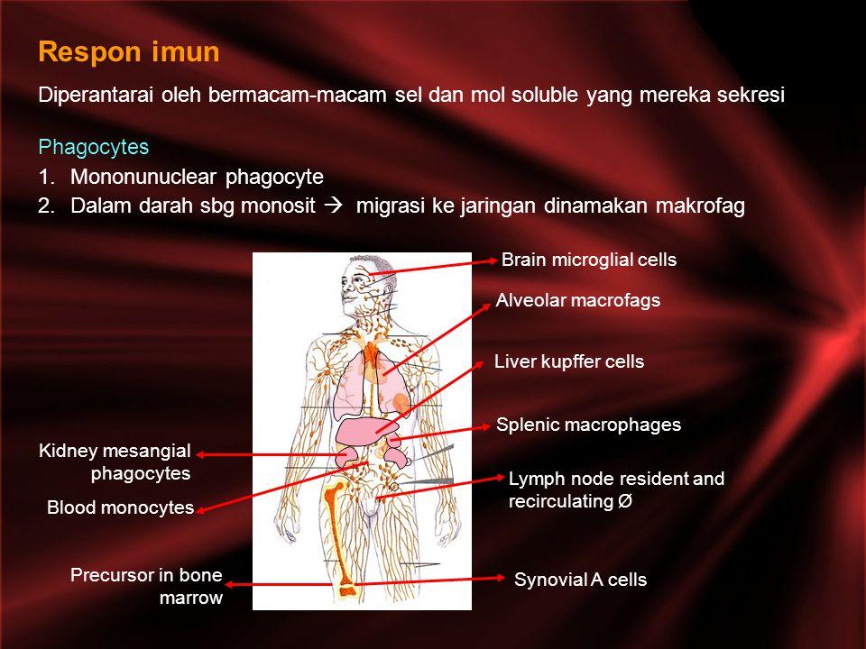 Respon imun Diperantarai oleh bermacam-macam sel dan mol soluble yang mereka sekresi. Phagocytes. Mononunuclear phagocyte.