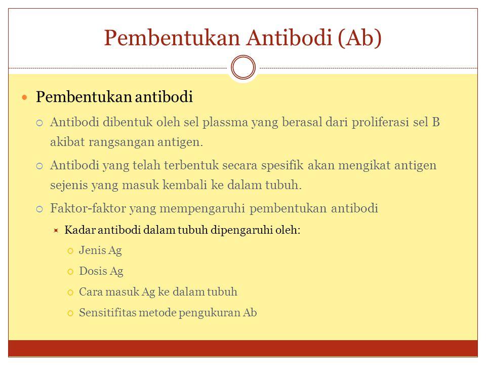 Pembentukan Antibodi (Ab)