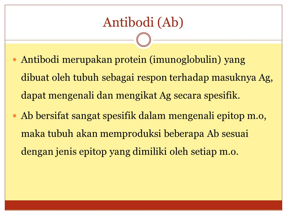 Antibodi (Ab)