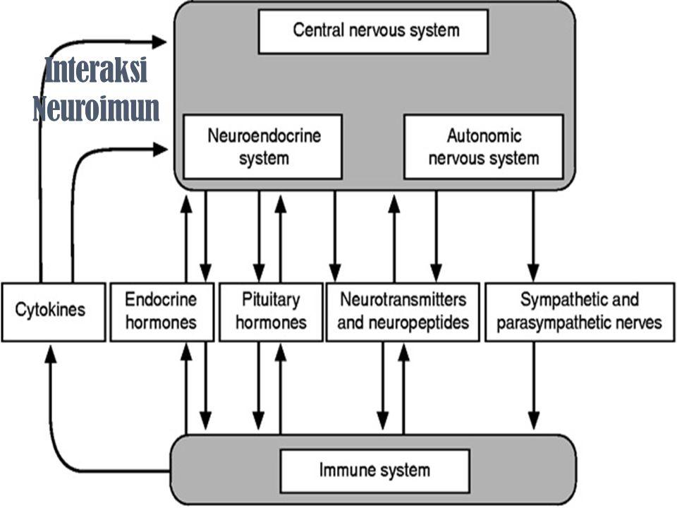 Interaksi Neuroimun