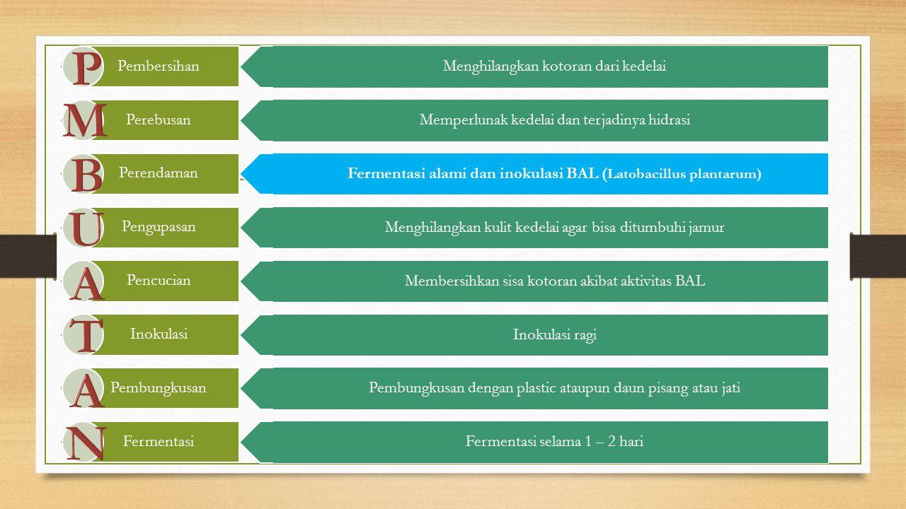 Fermentasi alami dan inokulasi BAL (Latobacillus plantarum)