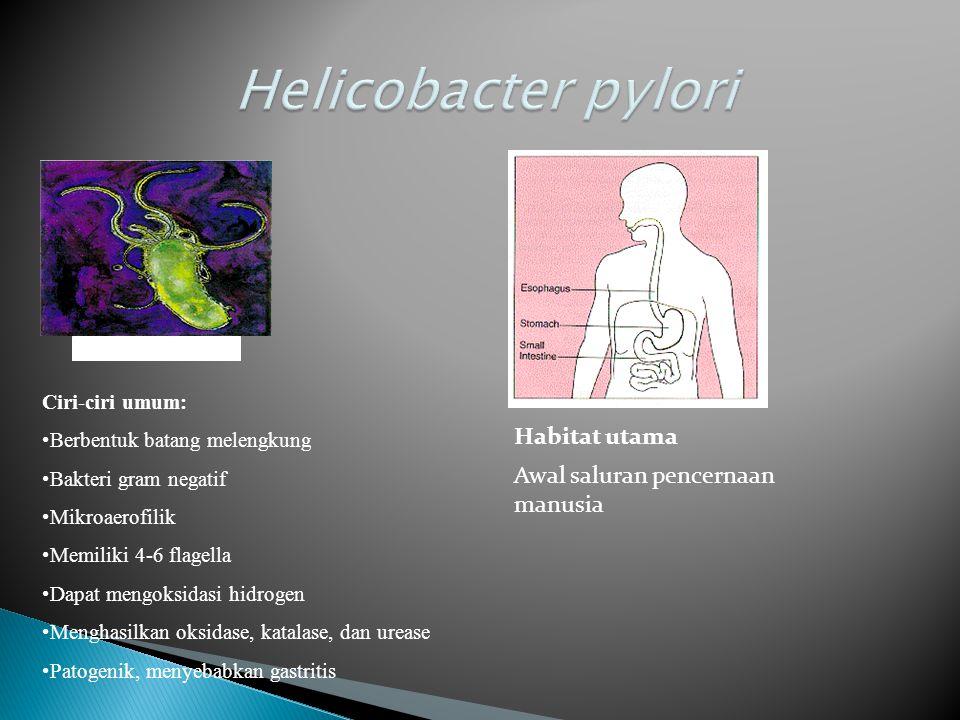 Helicobacter pylori Habitat utama Awal saluran pencernaan manusia