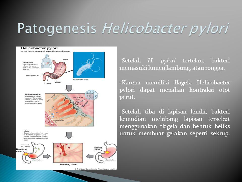 Patogenesis Helicobacter pylori