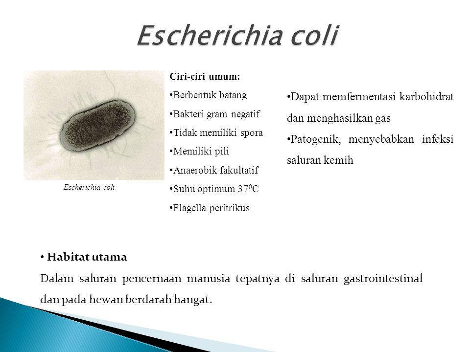 Escherichia coli Dapat memfermentasi karbohidrat dan menghasilkan gas