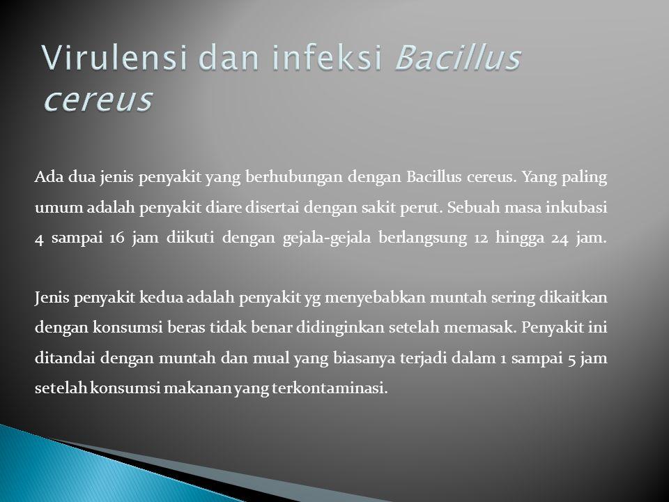 Virulensi dan infeksi Bacillus cereus
