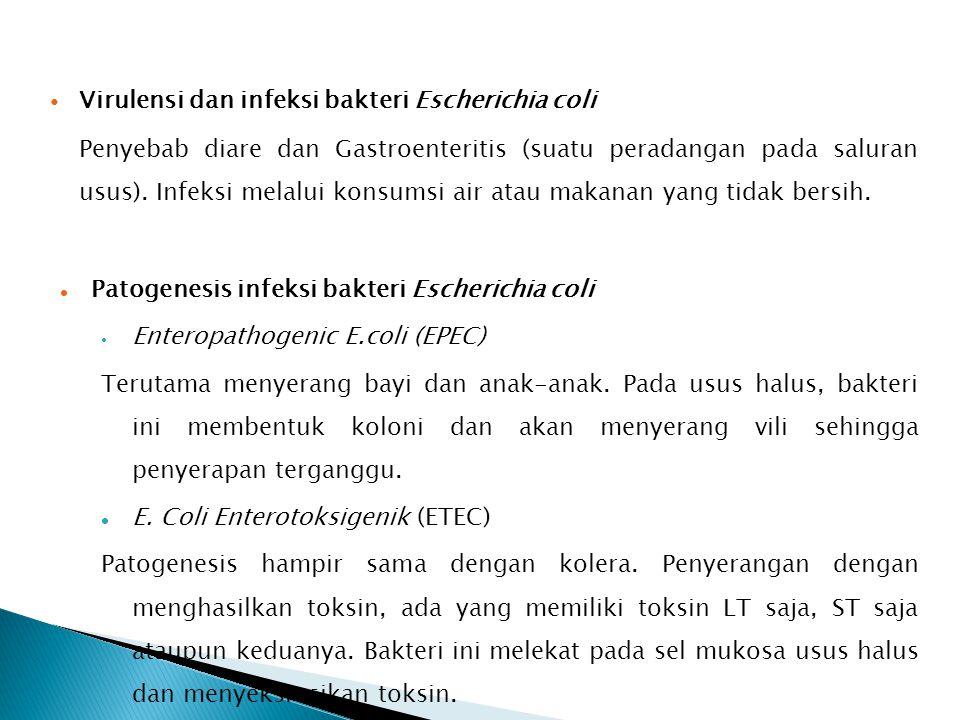 Virulensi dan infeksi bakteri Escherichia coli