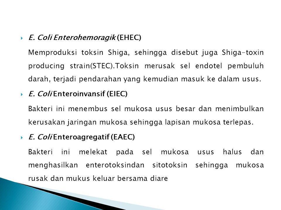 E. Coli Enterohemoragik (EHEC)
