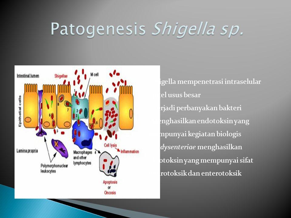 Patogenesis Shigella sp.