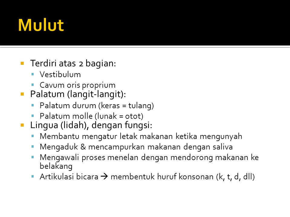 Mulut Terdiri atas 2 bagian: Palatum (langit-langit):