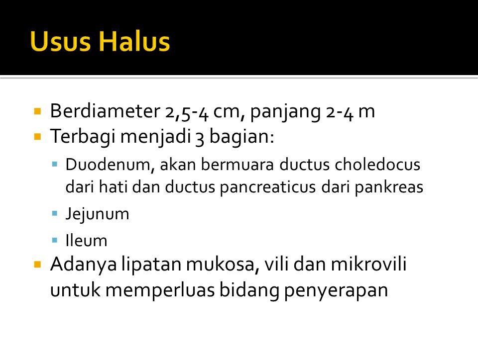 Usus Halus Berdiameter 2,5-4 cm, panjang 2-4 m