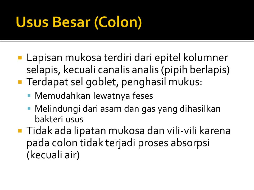 Usus Besar (Colon) Lapisan mukosa terdiri dari epitel kolumner selapis, kecuali canalis analis (pipih berlapis)