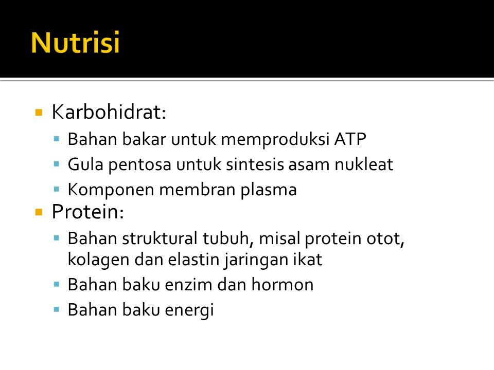 Nutrisi Karbohidrat: Protein: Bahan bakar untuk memproduksi ATP