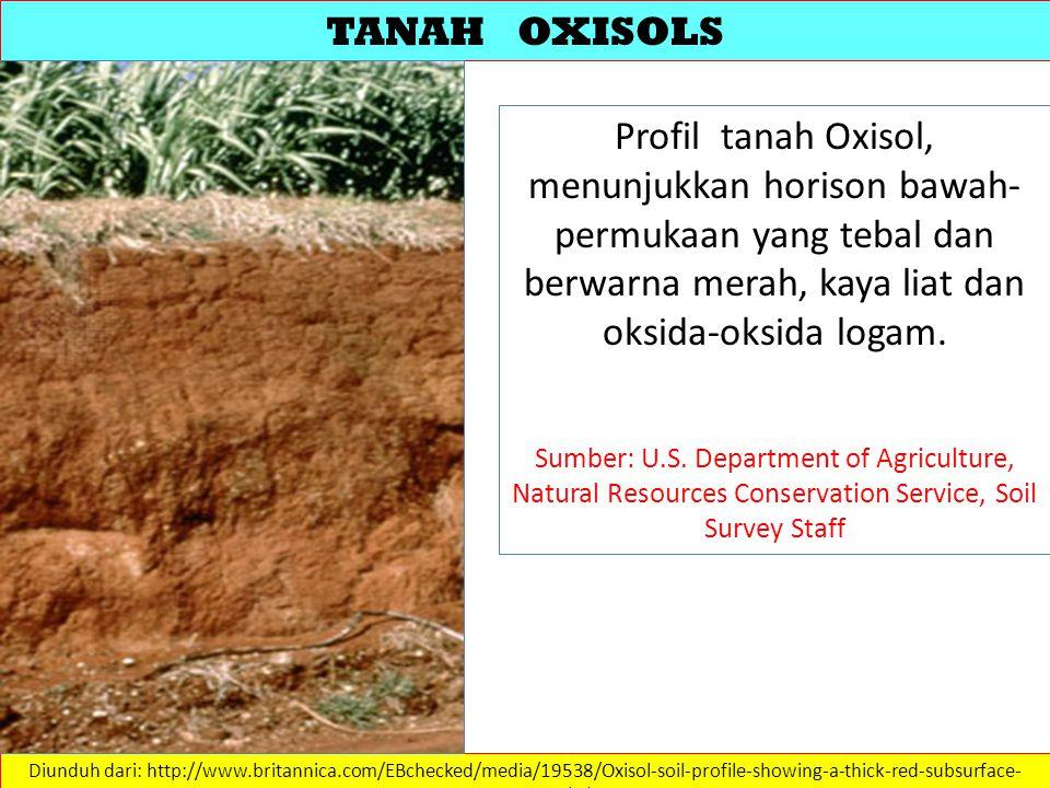 TANAH OXISOLS Profil tanah Oxisol, menunjukkan horison bawah-permukaan yang tebal dan berwarna merah, kaya liat dan oksida-oksida logam.
