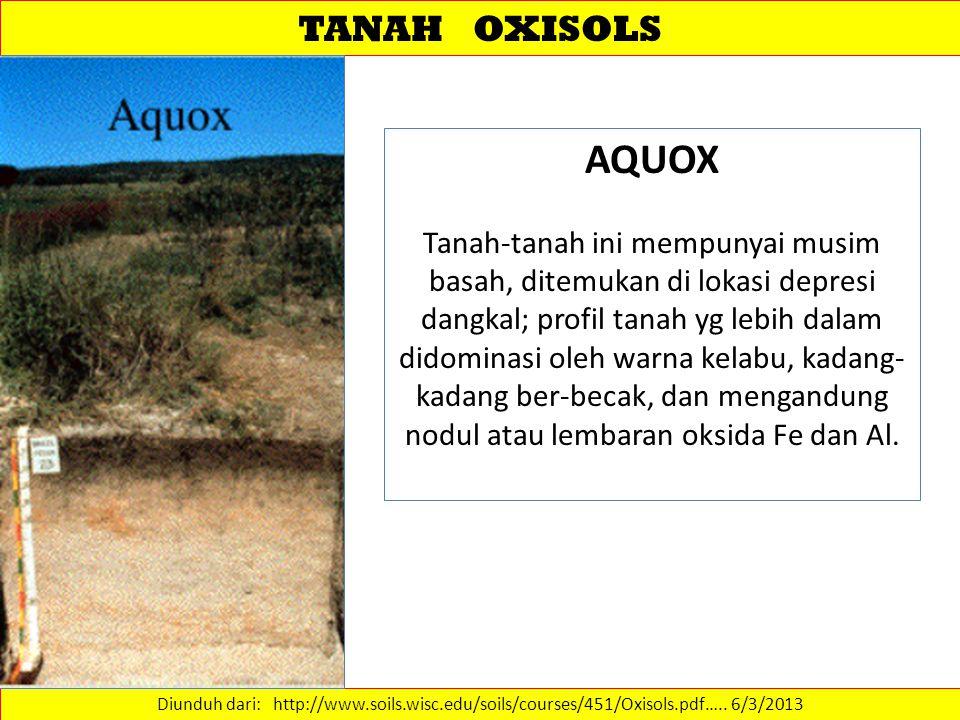 TANAH OXISOLS AQUOX.