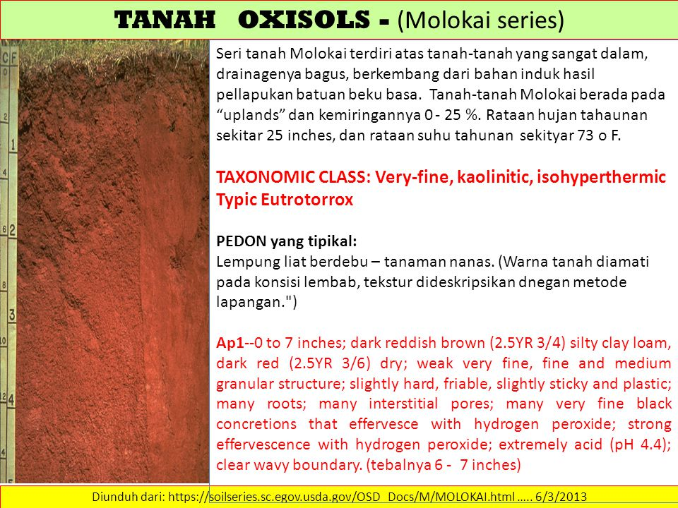 TANAH OXISOLS - (Molokai series)