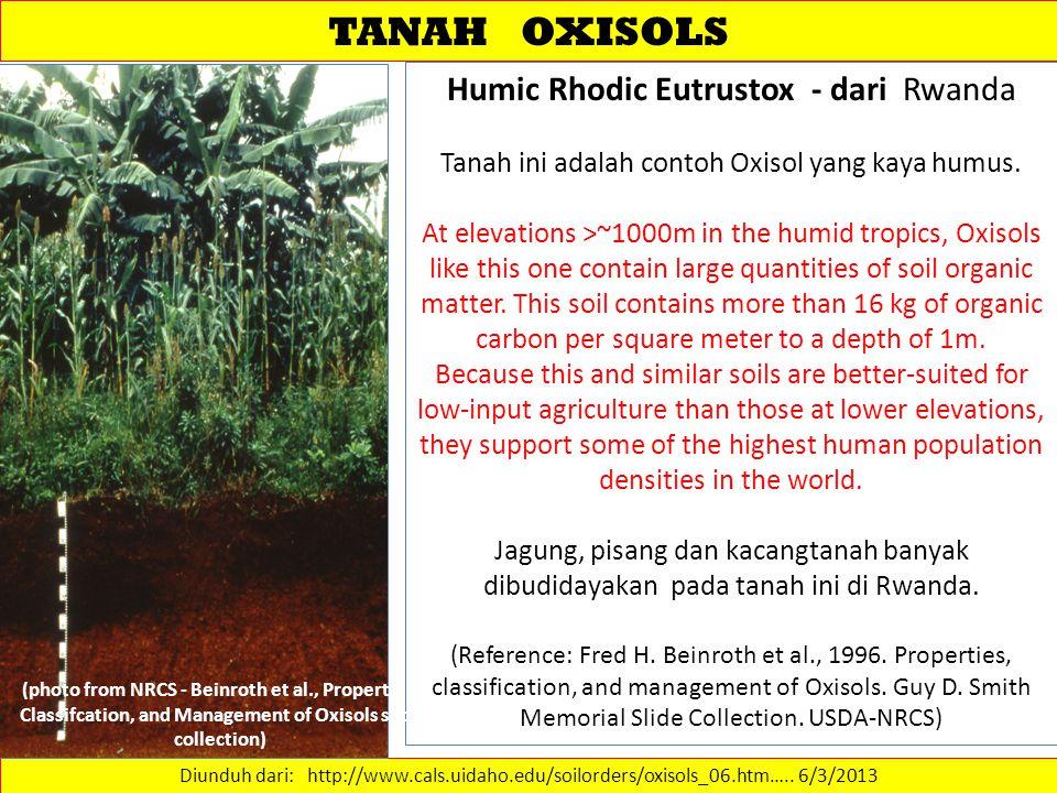 TANAH OXISOLS Humic Rhodic Eutrustox - dari Rwanda Tanah ini adalah contoh Oxisol yang kaya humus.