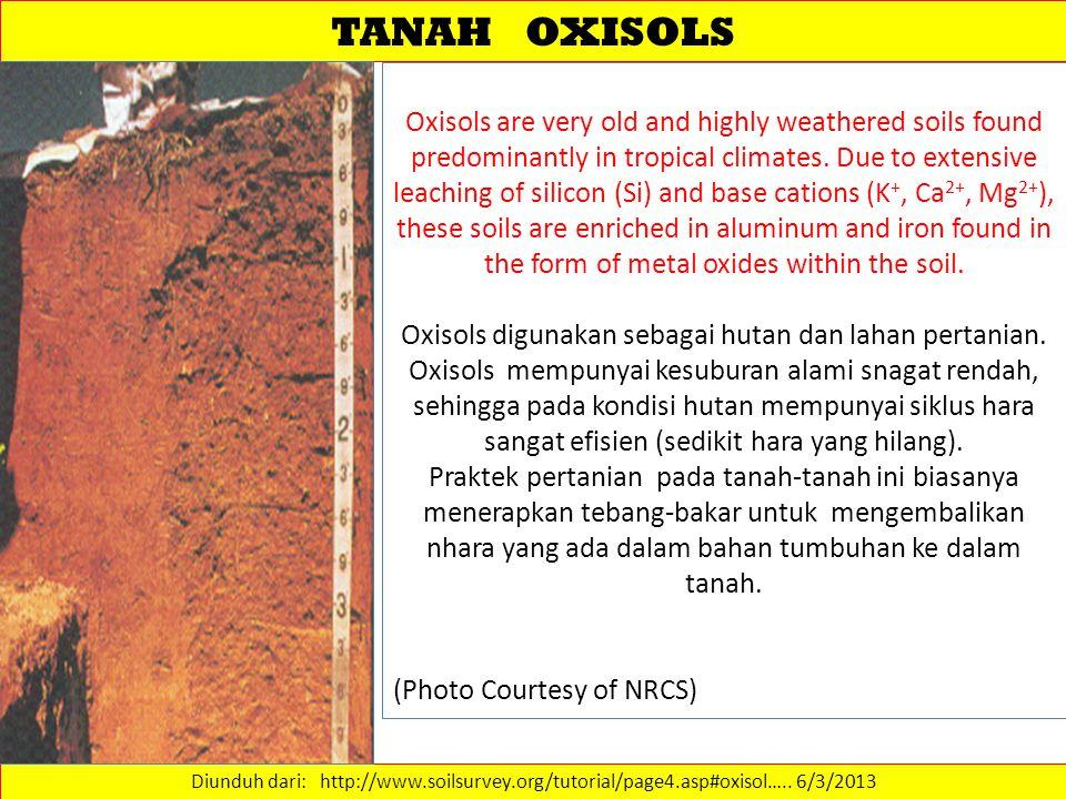 TANAH OXISOLS