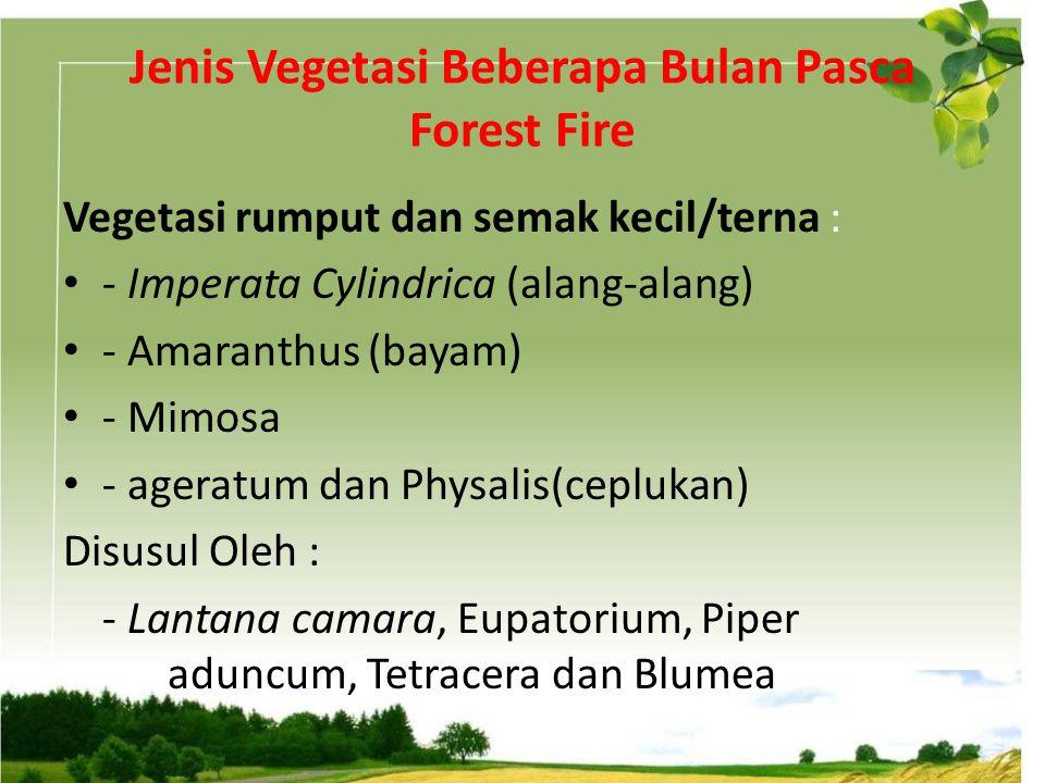 Jenis Vegetasi Beberapa Bulan Pasca Forest Fire