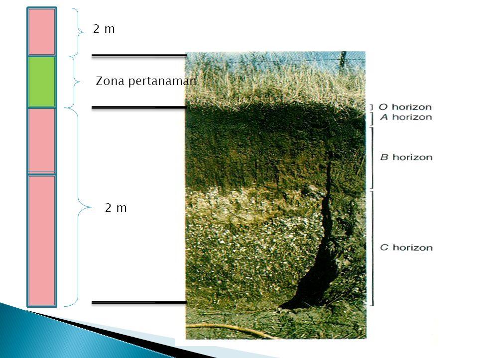2 m Zona pertanaman 2 m