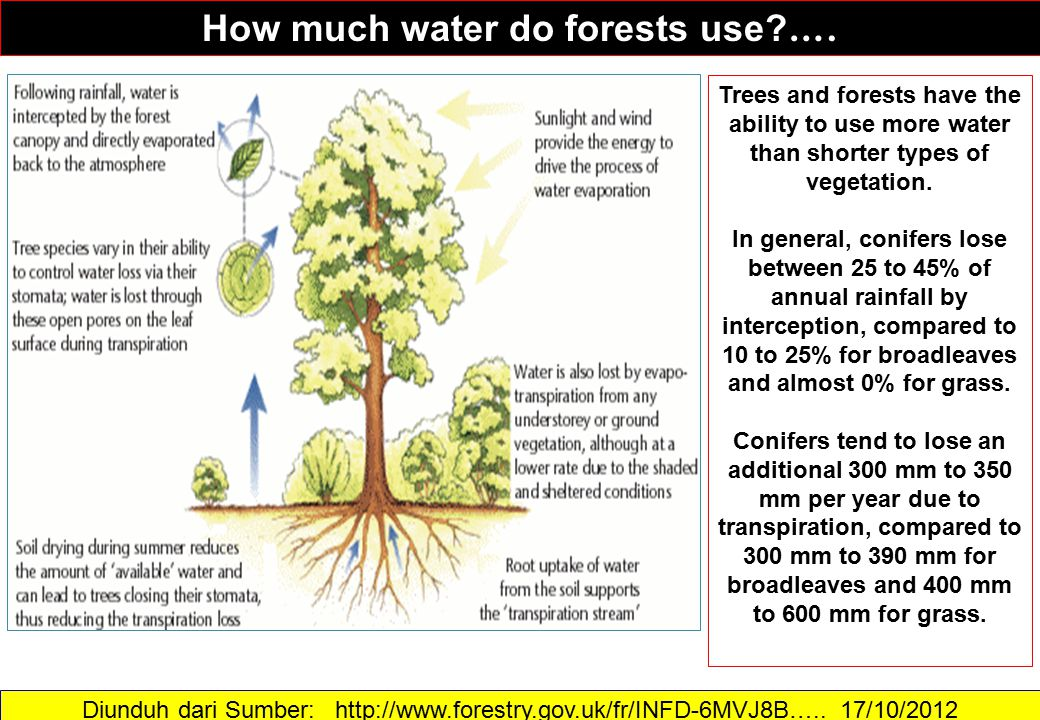 How much water do forests use ….