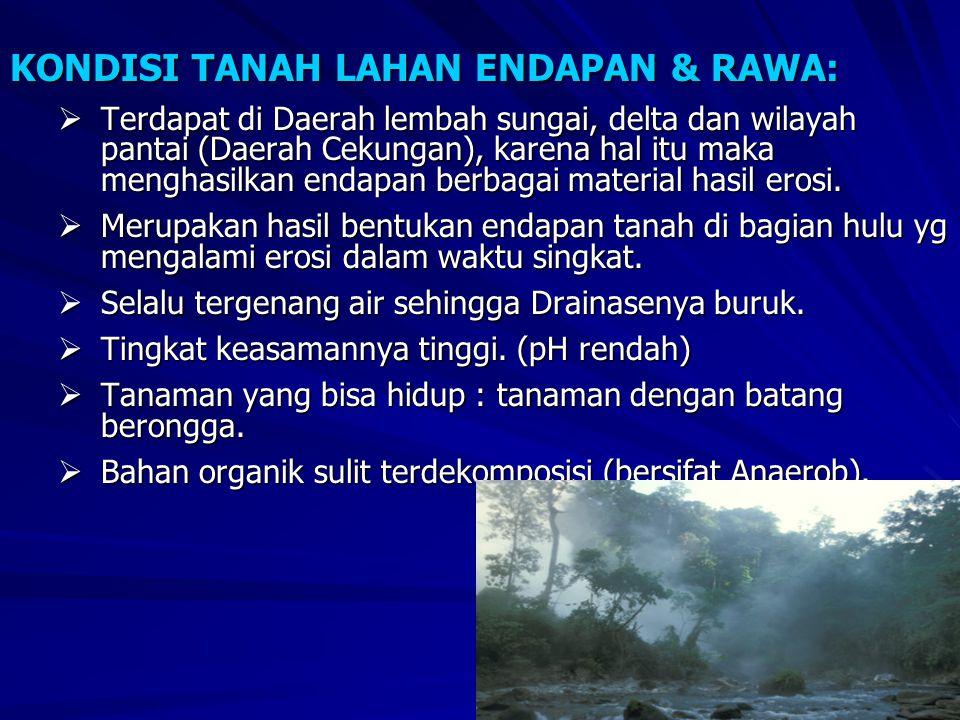 KONDISI TANAH LAHAN ENDAPAN & RAWA: