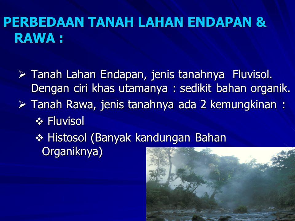 PERBEDAAN TANAH LAHAN ENDAPAN & RAWA :
