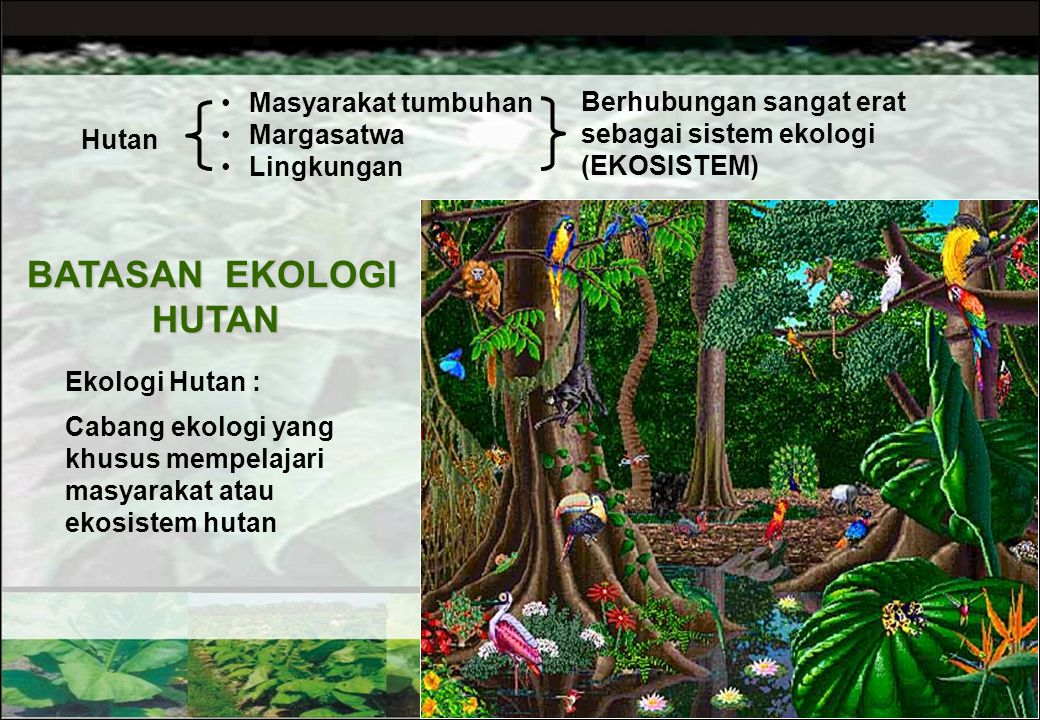 BATASAN EKOLOGI HUTAN Masyarakat tumbuhan
