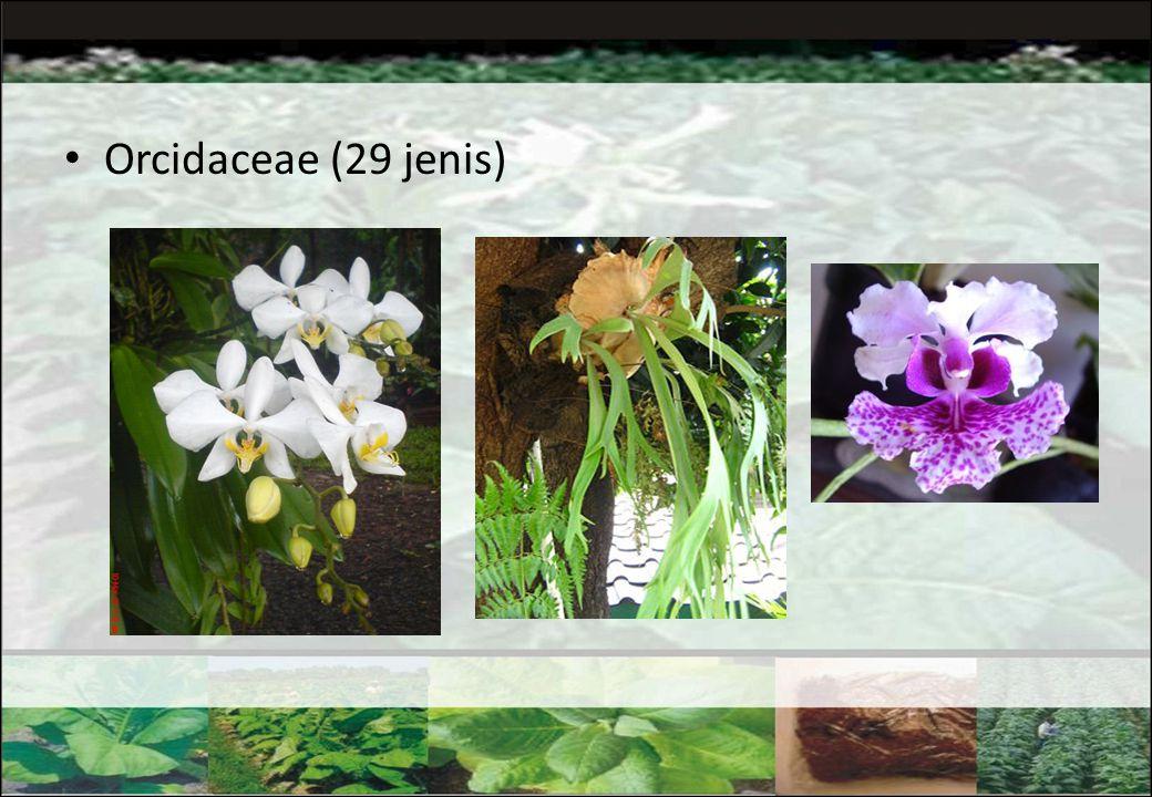 Orcidaceae (29 jenis)