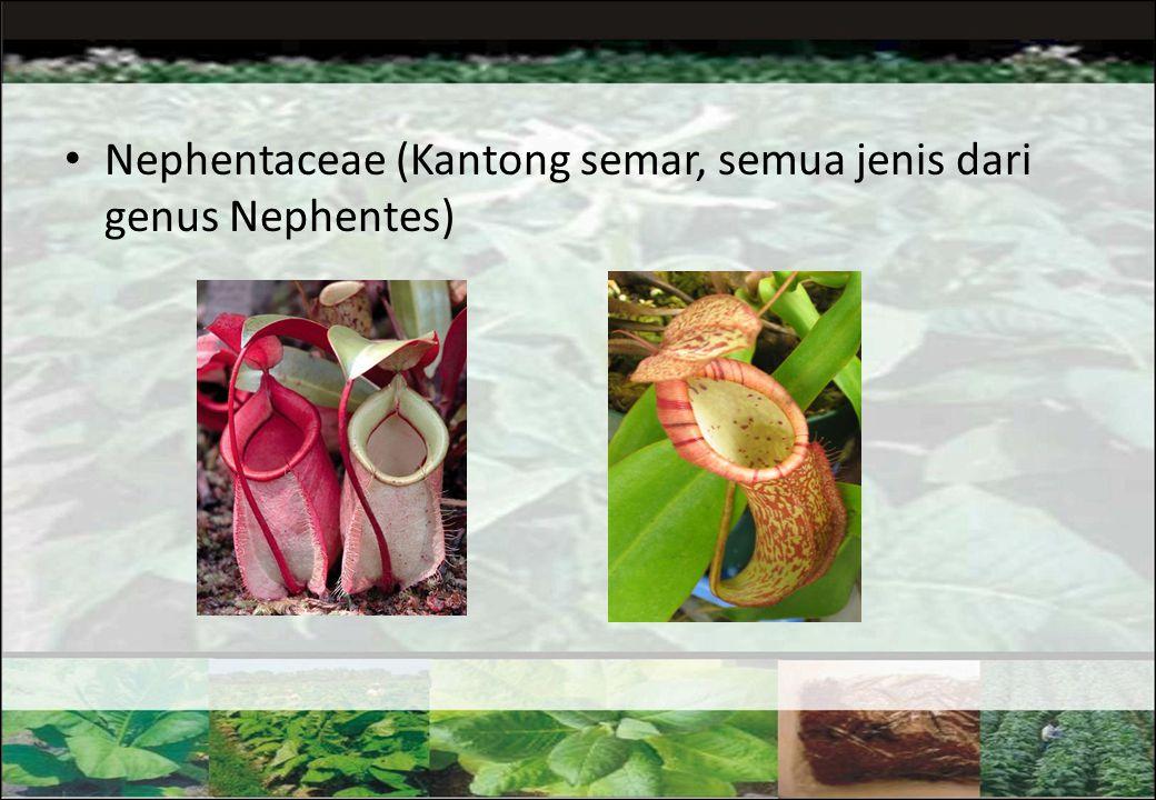 Nephentaceae (Kantong semar, semua jenis dari genus Nephentes)
