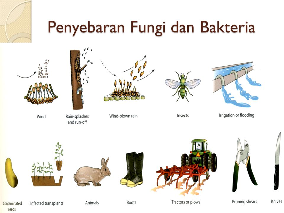 Penyebaran Fungi dan Bakteria