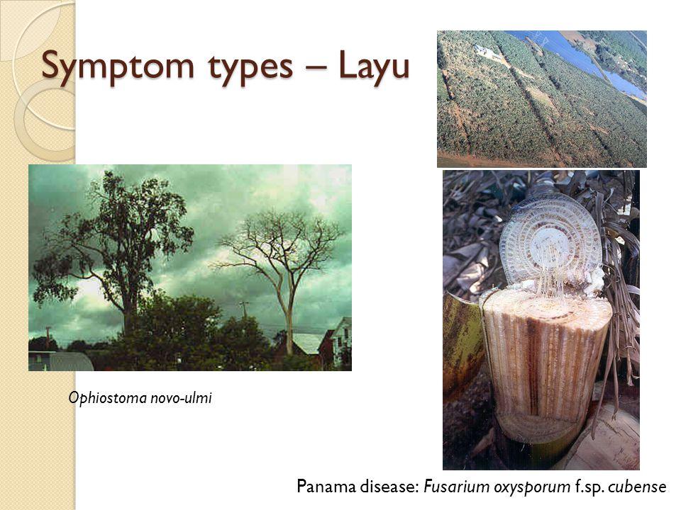 Symptom types – Layu Panama disease: Fusarium oxysporum f.sp. cubense
