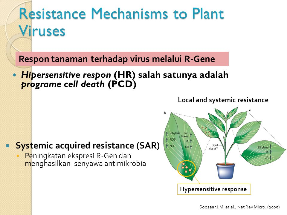 Resistance Mechanisms to Plant Viruses