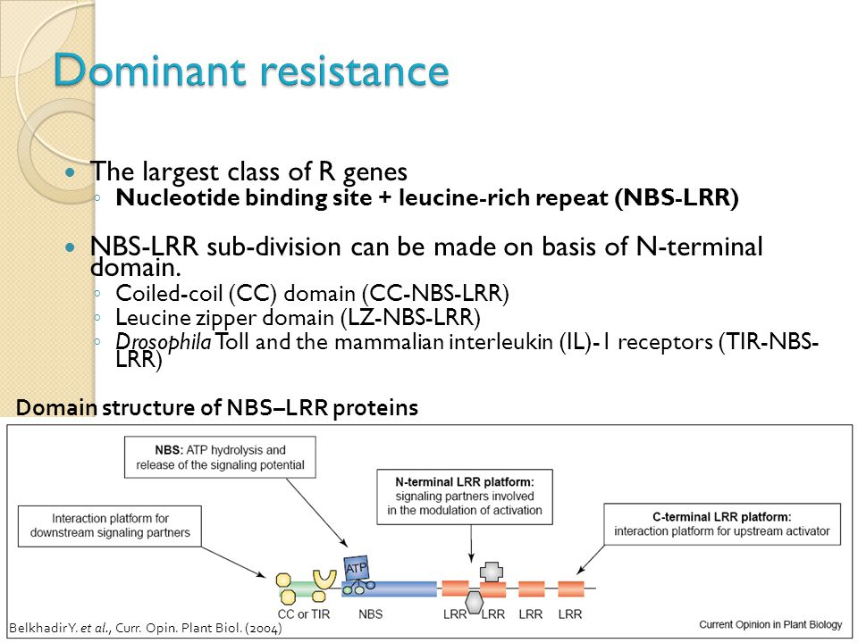 Dominant resistance The largest class of R genes
