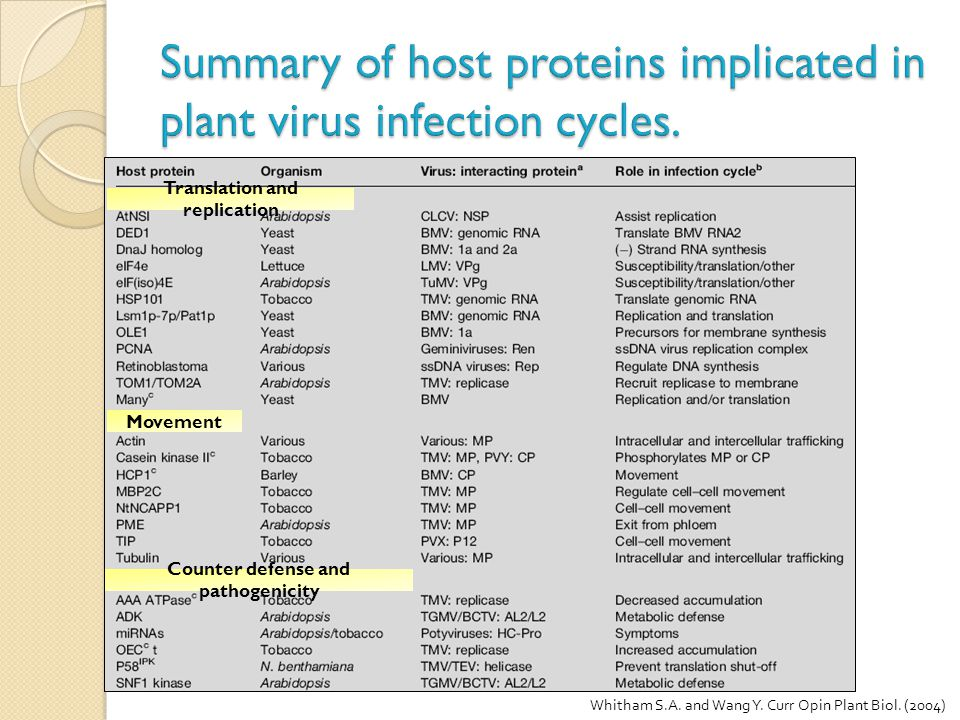Summary of host proteins implicated in plant virus infection cycles.