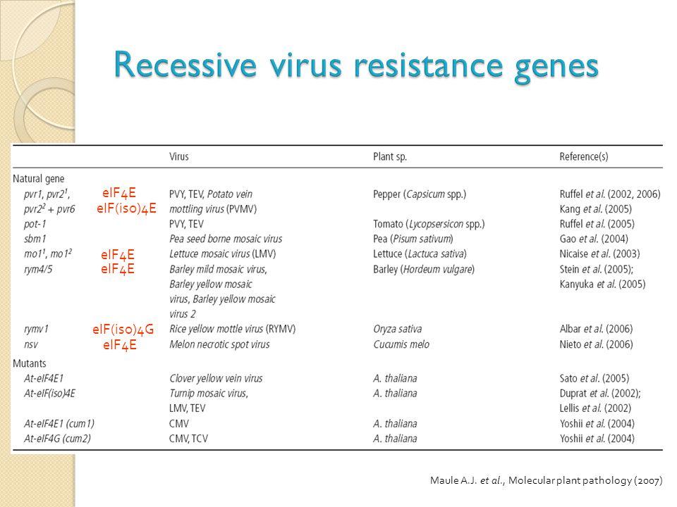Recessive virus resistance genes
