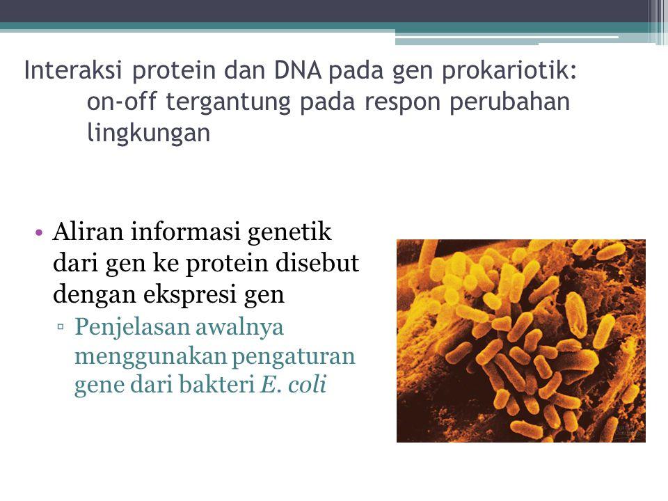 Interaksi protein dan DNA pada gen prokariotik: on-off tergantung pada respon perubahan lingkungan